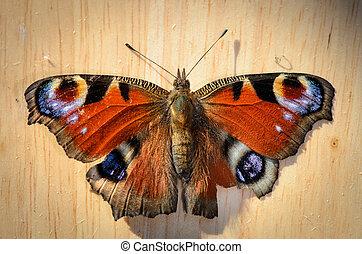 Butterfly (peacock eye) on wood in top view - Schmetterling,...
