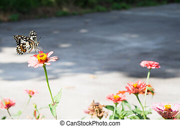 Butterfly perched on a flower in the morning sun.