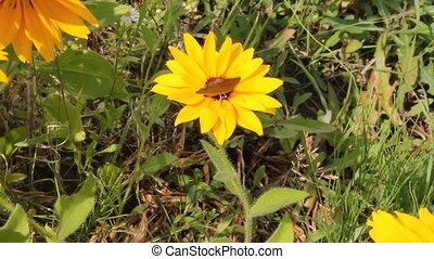 butterfly perching on a flower