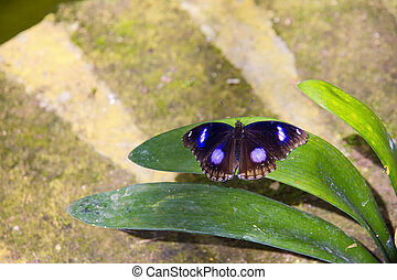 Butterfly - Close-up of a colorful and beautiful butterfly