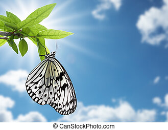butterfly hanging on plant against blue sky