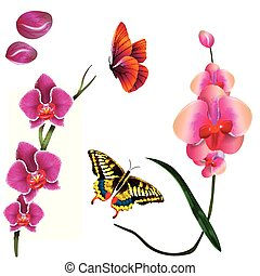 Butterfly Pink Orchid White Background Vector Image