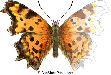 Butterfly Polygonia c-album. Unfinished Watercolor drawing imitation. Raster version.