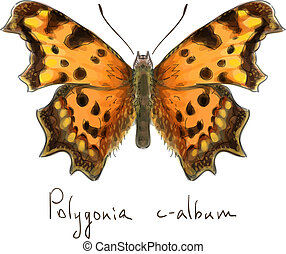 Butterfly Polygonia c-album. Watercolor imitation.