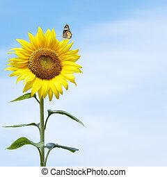 butterfly rest on sunflower against blue sky