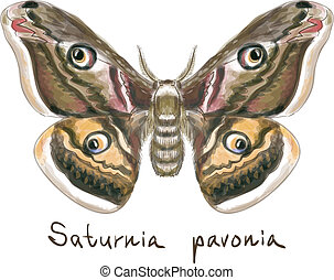 Butterfly Saturnia Pavonia. Watercolor imitation. Vector...