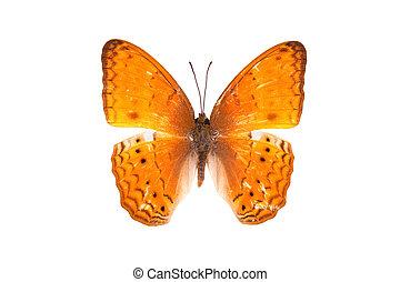 Butterfly series - Beautiful Butterfly