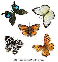 butterfly set collection
