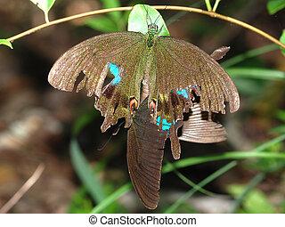 butterfly sex mate