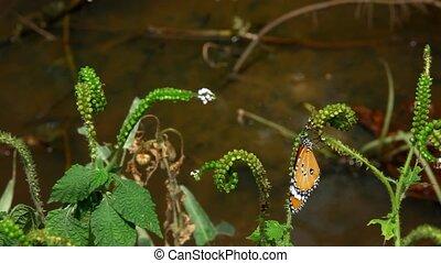 Butterfly sits on a branch near pond.