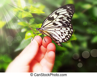 butterfly sitting on a children's hand