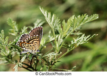 Butterfly sitting on a green branch close-up