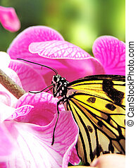 Butterfly sitting on a pink orchid
