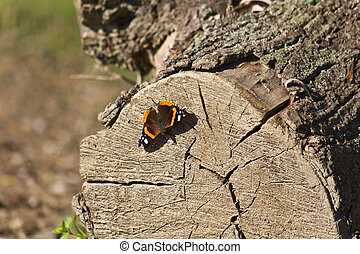 Butterfly sitting on a trunk
