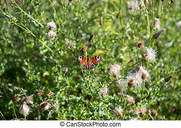 butterfly sitting on blossoms of flowers in the sun