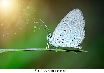 butterfly sitting on green grass