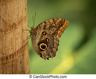 Butterfly Sitting on Plant