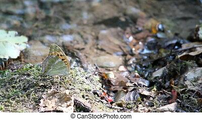 butterfly spring scene