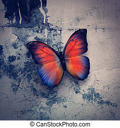 butterfly - beautiful butterfly on grange wall surface