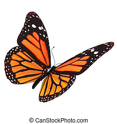 butterfly - Butterflies are part of the class of insects in...