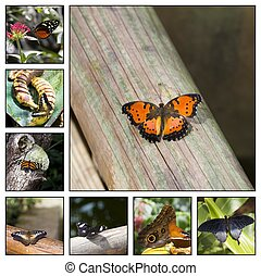 Butterfly - Collage. Close-up of a colorful and beautiful...