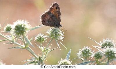butterfly summer morning scene