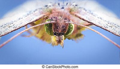 Butterfly super macro