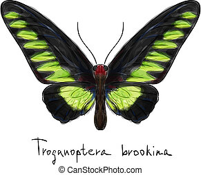 Butterfly Troganoptera Brookina (male). Watercolor imitation.