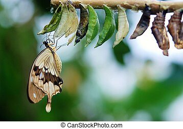 Butterfly Eating on a Branch