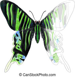 Butterfly Urania Leilus. Unfinished Watercolor drawing imitation. Vector illustration.