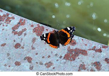 Butterfly Vanessa atalanta sitting on a stone slab.