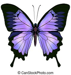 Butterfly. Vector illustration of beautiful pink and purple color