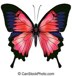 Butterfly. Vector illustration
