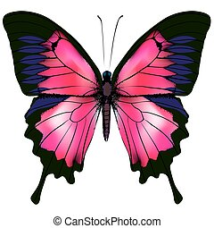 Butterfly. Vector illustration of red butterfly isolated on white background.
