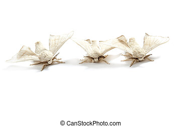 butterfly white of silkworm silk worm isolated