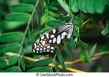Butterfly wings on the green leaf tree