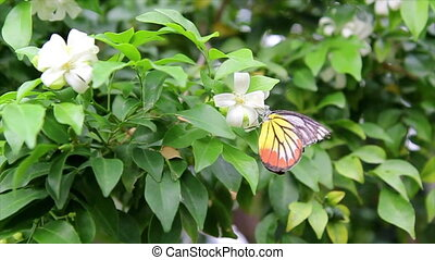 Butterfly with white flowers