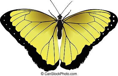 Butterfly yellow vector