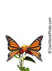 Butterflys Abrest Greeting Card 1