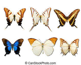 Butterflys on white background - Collage of six different...