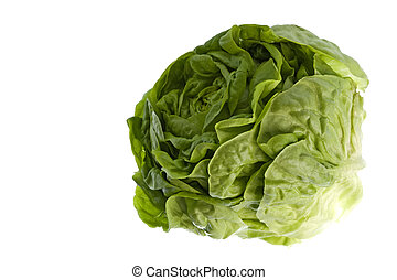 Butterhead Lettuce Isolated - Isolated macro image of a...