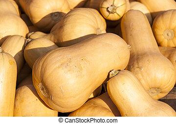 butternuss, otoño, calabazas, harv, cucurbita, butternut, ...