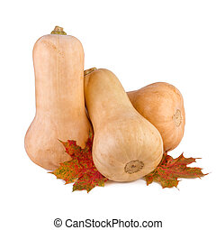 Butternut squash. Butternut pumpkin with fall leaves isolated on white.