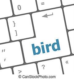 Button keyboard key, keypad with bird word