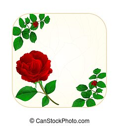 Button square cracks in the porcelain and rose vintage vector