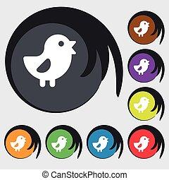 buttons., cégtábla., színezett, jelkép, csirke, vektor, nyolc, madár, ikon