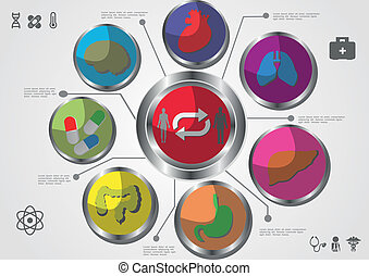 Medical, health and icons and data elements, info graphic heart, brain , kidney and other human organs symbols