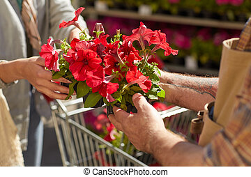 Buying Flowers at Plantation Close Up