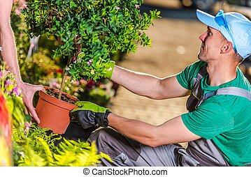 Buying Garden Plants