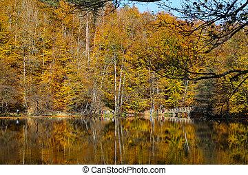 Buyuk Lake in Yedigoller National Park, Bolu, Turkey - Buyuk...
